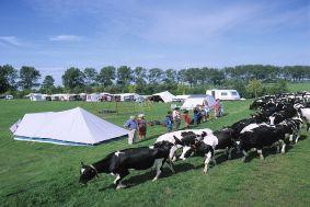 Boarnshiem - kamperen bij de boer